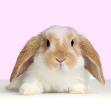 Непобедимые кролики