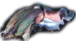 http://avstralianature.ru/img/pages/Питание и размножение