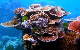 http://avstralianature.ru/img/pages/Спасение Большого барьерного рифа
