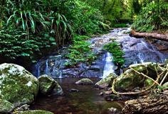http://avstralianature.ru/img/pages/Национальный парк «Ламингтон»