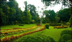 http://avstralianature.ru/img/pages/Ботанический сад в Мельбурне