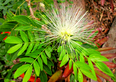 http://avstralianature.ru/img/pages/Флора Австралии – главные особенности и уникальность природной среды