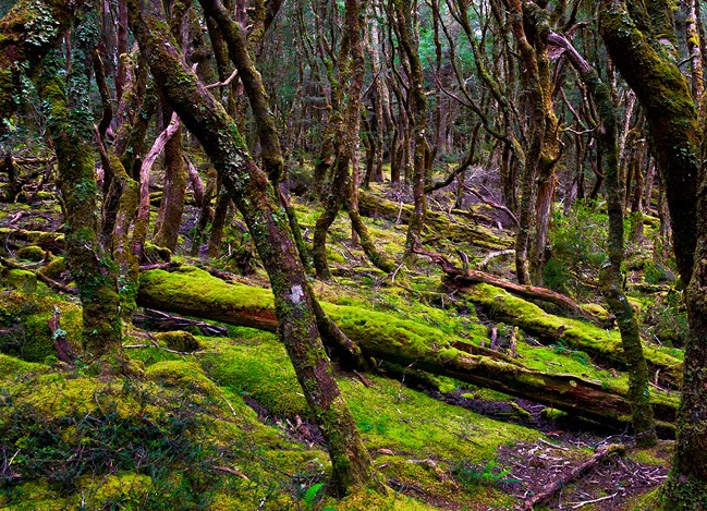 http://avstralianature.ru/img/pages/Тасманские леса