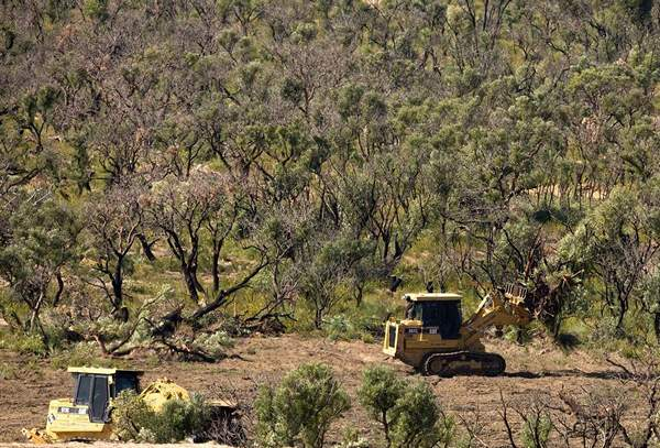 http://avstralianature.ru/img/pages/Вырубка австралийских лесов.