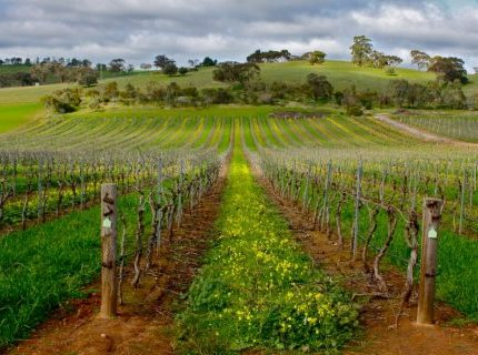 http://avstralianature.ru/img/pages/Долина Баросса (Barossa Valley)