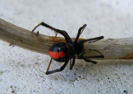 http://avstralianature.ru/img/pages/Обманчиво не слишком опасная австралийская фауна.