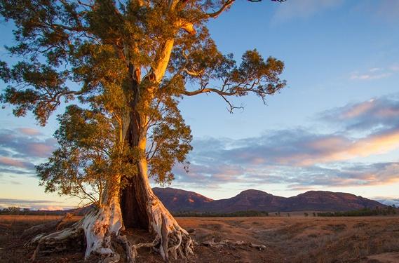 http://avstralianature.ru/img/pages/Австралийские красоты и их своеобразие.