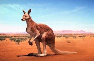 http://avstralianature.ru/img/pages/Исторически реалистичный взгляд на австралийскую фауну.